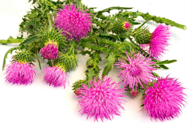 plantas medicinales para el acné bardana para los granos de la frente
