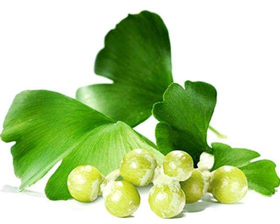 plantas medicinales para varices ginkgo biloba