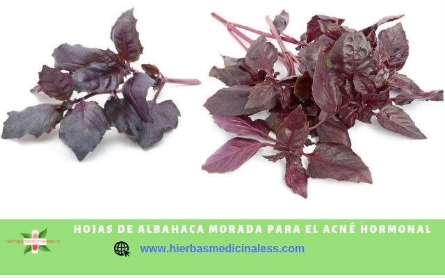 hojas de albahaca para combatir barritos de la cara