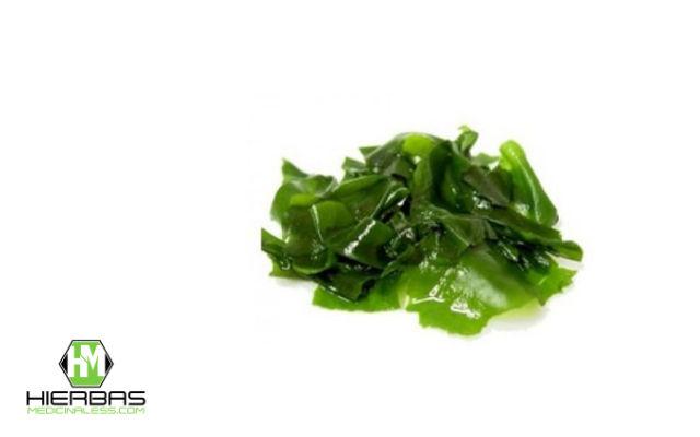 algas para bajar de peso