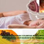 como eliminar parasitos intestinales rapidamente en adultos