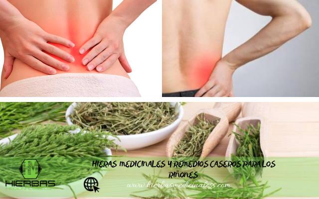 hierbas para los riñones inflamados