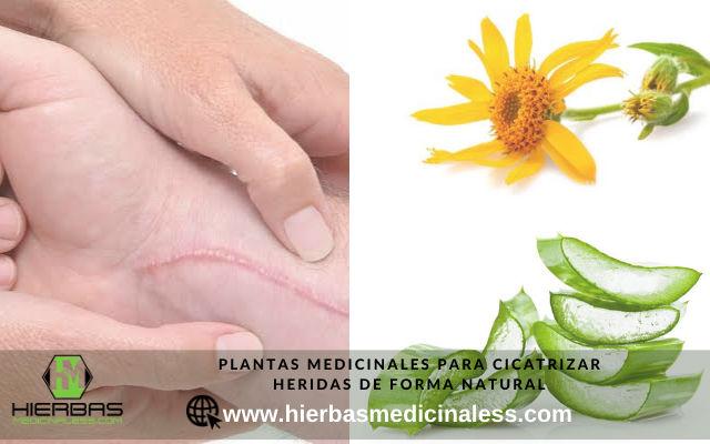 plantas medicinales para cicatrizar heridas de forma natural