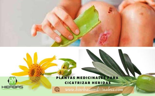plantas para curar heridas