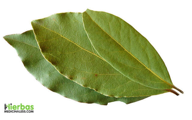 como preparar las hojas de laurel para bajar de peso