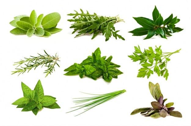 hierbas medicinales para los riñones el higado graso
