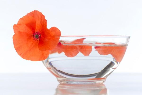 flor de amapola para bajar de peso