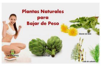 plantas para quemar grasa y bajar de peso