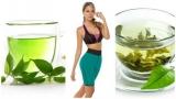 Hierbas Medicinales para Adelgazar Rápidamente