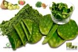 Lista de Plantas medicinales Para controlar la Diabetes tipo1y tipo2