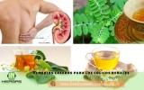 Hierbas medicinales para los cólicos renales